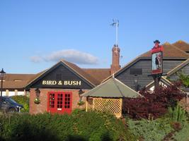 Bird and Bush